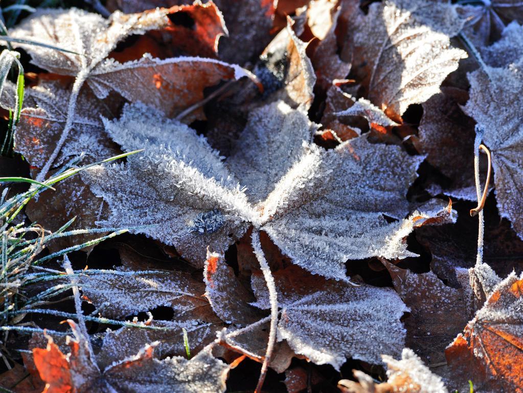Motiv: Herbst Frost im Hintergrund ..Ressort:Neumarkt..Foto: André De  Geare..