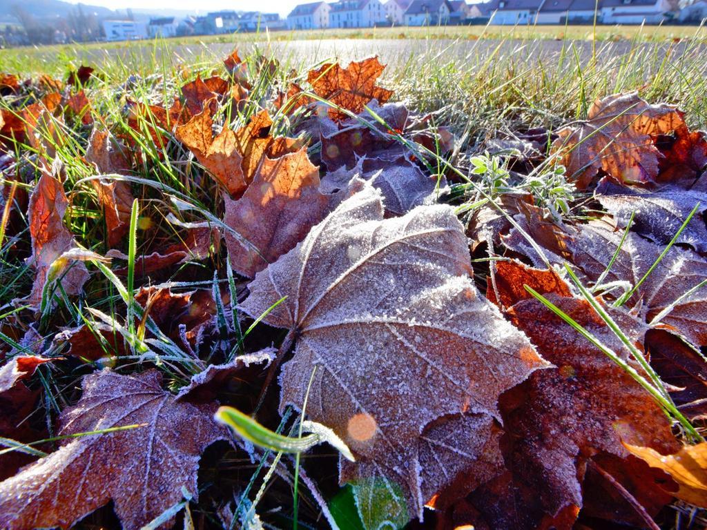 Motiv: Herbst Frost im Hintergrund Neumarkt Altenhof..Ressort:Neumarkt..Foto:  André De Geare..