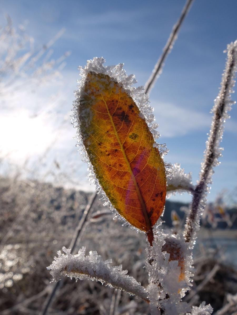Frost in Retzelsdorf