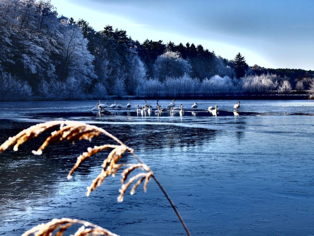 Flamingos im Frost bei Retzelsdorf