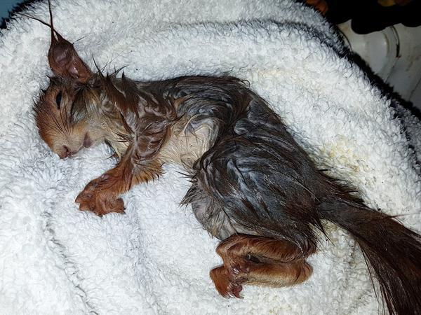 Nach einer guten Stunde war das Tier gerettet, in ein warmes Handtuch gewickelt und mit Glukose gefüttert.