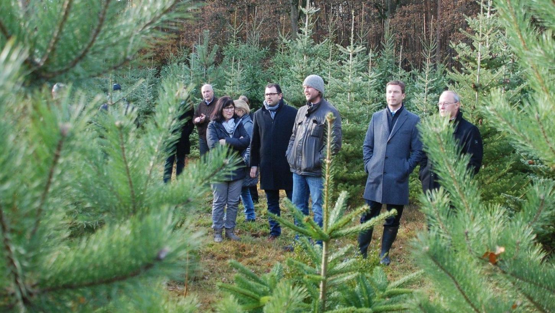 """Saftig grün, herrlich duftend und gerade im Wuchs — so muss der ideale Weihnachtsbaum aussehen. Es gibt ihn auch direkt vor der Haustür, wovon sich die Initiative """"Gutes aus dem Fürther Land"""" überzeugt hat."""