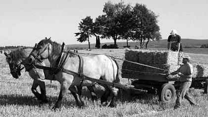 Passanten reiben sich nicht selten die Augen: Landwirt Michael Konobasek fährt noch mit Pferden auf den Acker und lädt die Strohballen mit der Hand auf.