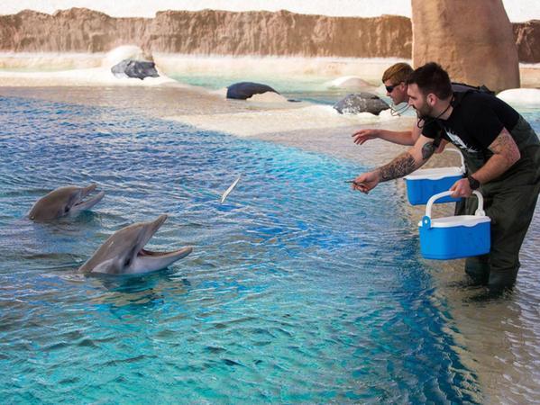 Ähnlich wie in der Lagune des Nürnberger Tiergartens gibt es auch in der Delfinanlage des Rancho Texas Parks auf Lanzarote Flachwasserzonen. Dort schwimmen die Tiere nahe an die Betreuer heran.