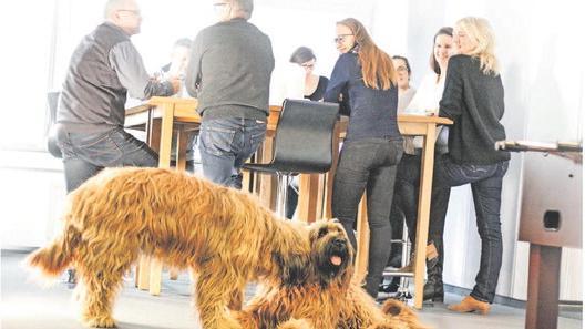 Die Hunde Sophie und Bilbo sind im Marktforschungsinstitut con Sens voll integriert und liegen immer da, wo etwas los ist.