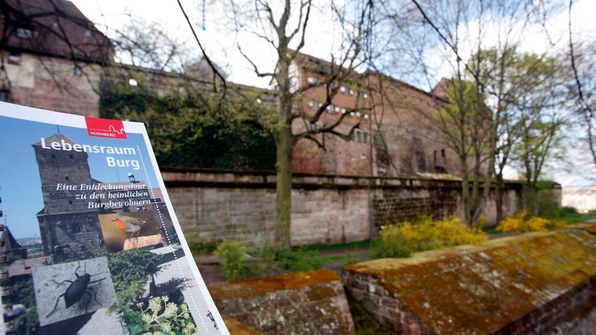 Die Burg ist ein bedeutender Lebensraum: Keller, Mauern, Türme und Grünflächen bieten vielfältige Lebensräume für Pflanzen und Tiere. Im Rahmen des Projekts