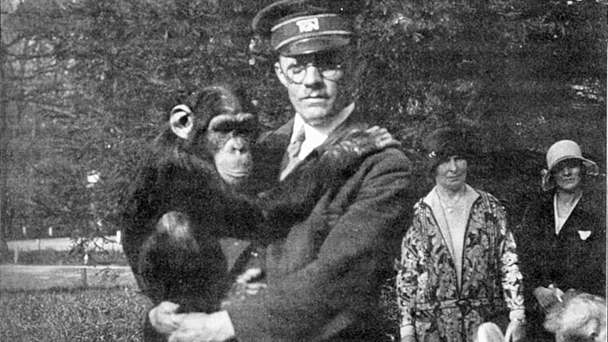 Schimpanse Blacky war einer der Publikumslieblinge der Tiergartenbesucher. Nach dem Ersten Weltkrieg war Nürnberg der einzige Zoo in Deutschland, der zwei Schimpansen hatte. Die beiden starben zwar an einer Infektionskrankheit - Nachfolger Blacky füllte die Lücke zusammen mit Schimpansendame Susette aber mustergültig.