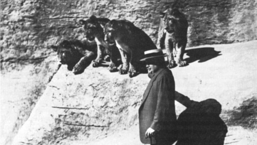 Eine Zeit lang gab es im Tiergarten eine Raubtierdressur. Tierinspektor Münzthaler übte, inspiriert von anderen Raubtierschauen, mit acht Löwenjungen Kunststücke ein. Die sprangen bald durch Reifen, schaukelten oder ließen sich auf einem Wagen von Ponys durch den Käfig ziehen. Star der Show war Rex. Die Vorführungen wurden 1930 eingestellt, nachdem es ein paar Mal zu Zwischenfällen gekommen war. Die Löwen brachen immer wieder aus und verletzten einmal ein Vorstandsmitglied, das seine Hand durch das Gitter gesteckt hatte. Im Bild Vorstandsmitglied Wilhelm Weigel im Löwengehege.