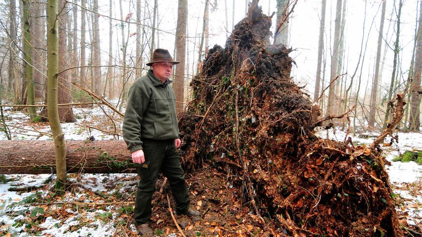 Insgesamt besteht der Kellerwald aus 198 Hektar. Um das grüne Herz Forchheims kümmert sich übrigens Stadtförster Stefan Distler.