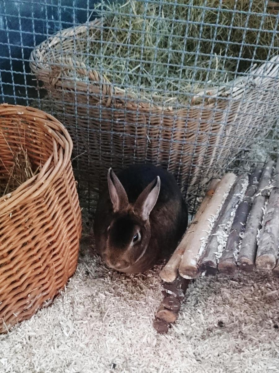 Hallo, ich bin Anja und suche ein geselliges Zuhause mit Artgenossen. Jedes soziale Tier braucht Artgenossen! Wussten Sie, dass die Haltung eines Kaninchen als Einzeltier oder auch mit einem Meerschweinchen zusammen keine artgerechte Lösung ist? Deshalb geben wir unsere Kaninchen nur zu zweit oder zu einem bestehenden Tier oder einer Gruppe ab. Da diese Tiere bis zu 12 Jahre alt werden können, sollte man den Platzbedarf nicht unterschätzen. Kaninchen brauchen viel Freifläche, um ihre Bedürfnisse des Hakenschlagens und Rennens voll ausleben zu können. Sie möchten gerne unseren Kaninchen ein artgerechtes Zuhause schenken. Dann beraten wir Sie gerne über alle Haltungs und Pflegebedürfnisse dieser Tiere.Weitere Infos unter der Telefonnummer 09151/6095923 zu den Vermittlungszeiten: Dienstag bis Freitag 13.30 Uhr - 15.30 Uhr.