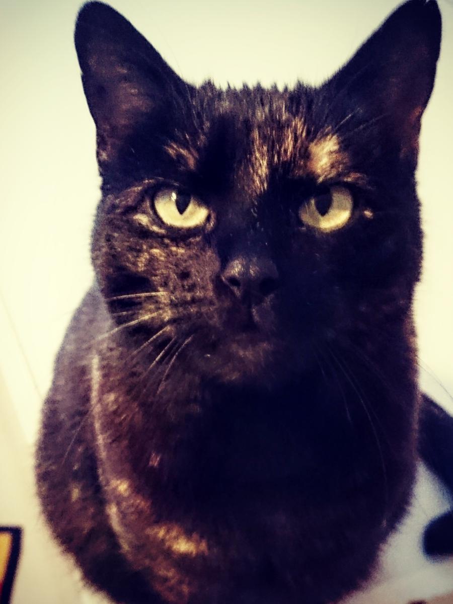 Hallo ich bin Mimile, eine sehr verschmuste und zutrauliche, ca. 3 Jahre alte Katze. In meinem neuen Zuhause sollte ich die einzige Katze sein, die auch in die Natur darf.Weitere Infos unter der Telefonnummer 09151/6095923 zu den Vermittlungszeiten: Dienstag bis Freitag 13.30 Uhr - 15.30 Uhr.
