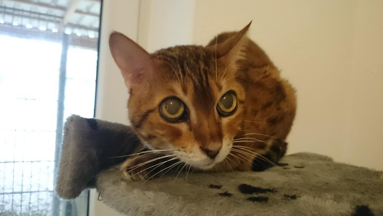 Im Tierheim Hersbruck ist es zwar schön, aber Hunde, Kaninchen und Katzen wie Sina suchen dringend ein neues Zuhause für den Rest ihres Lebens.