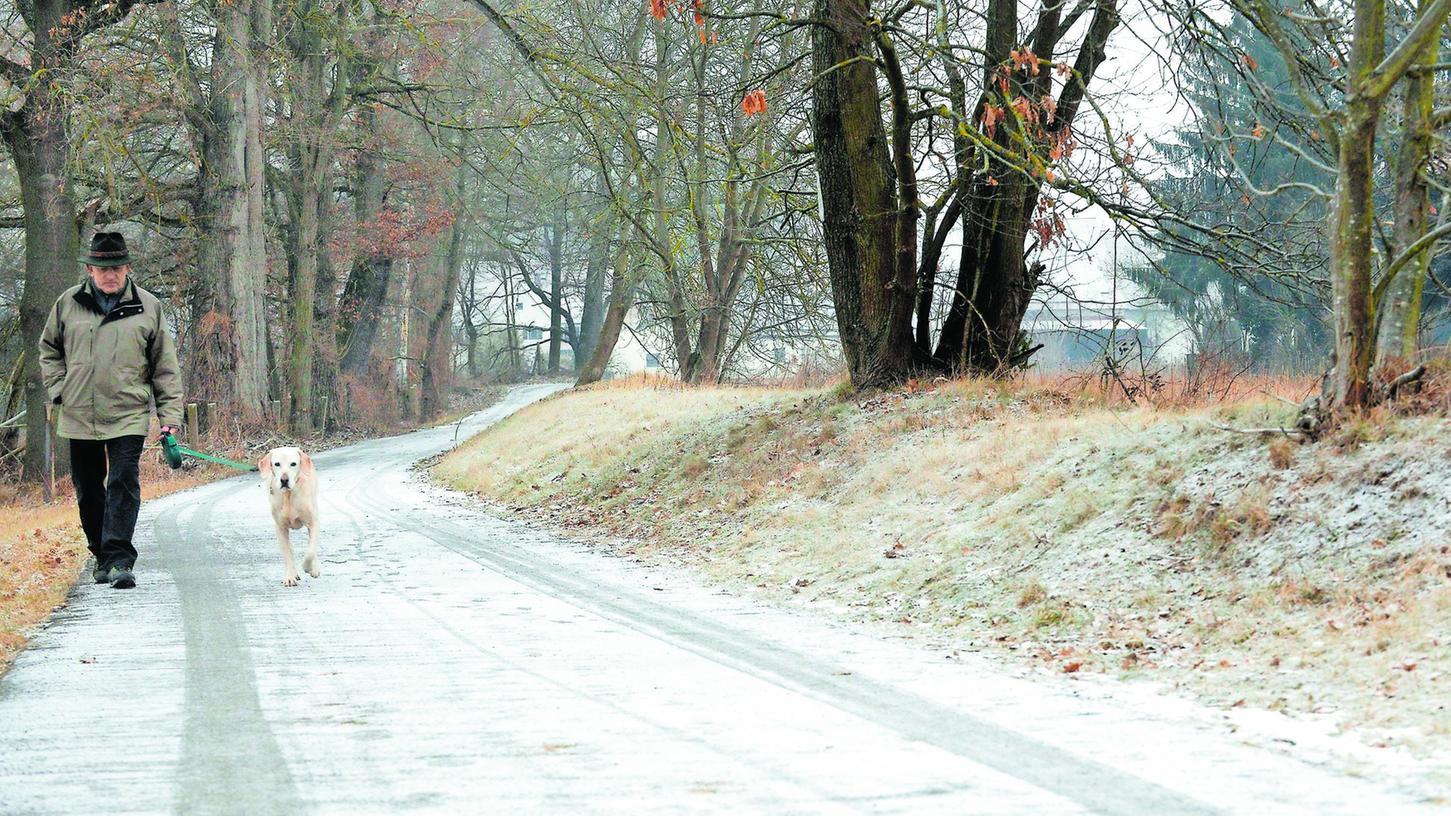 Viel zu niedrig und außerdem von Bäumen in seiner Stabilität beeinträchtigt ist der alte Hochwasserdeich am Buckweg. Das Wasserwirtschaftsamt drängt nun auf einen besseren Schutz.