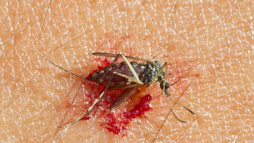 Mythos 2 – Mücken lieben