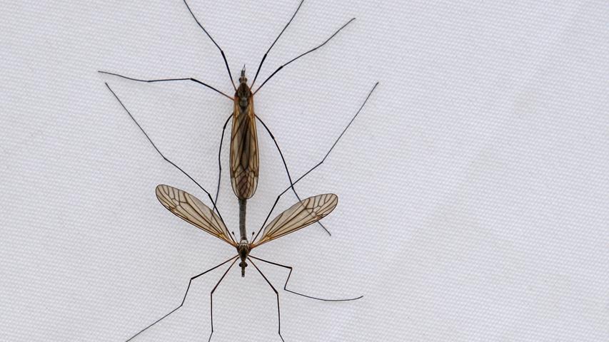 Mücken-Mythen: Das wussten Sie über Stechmücken noch nicht