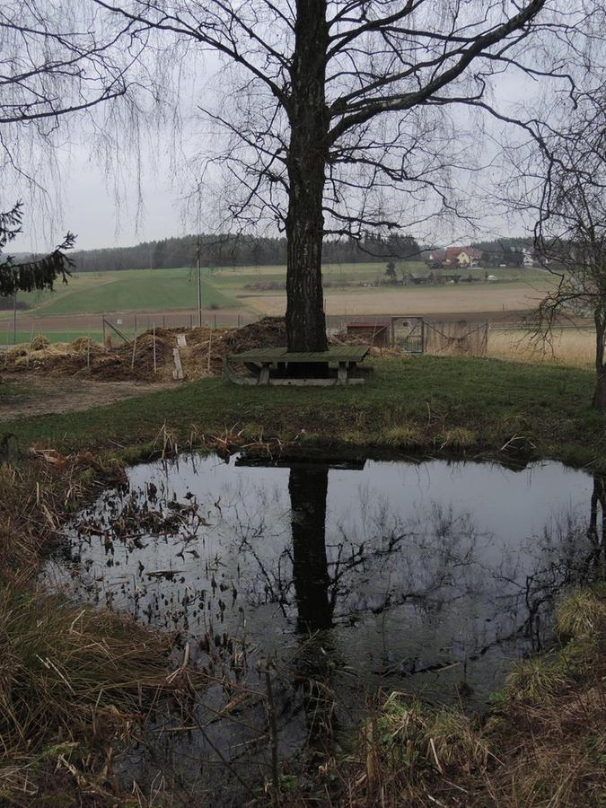 Was noch etwas trist aussieht, wird im Sommer zum Idyll: Der Teich, in dem Kröten bereits gelaicht haben.