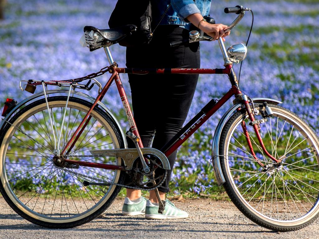 Eine junge Frau steht am 28.03.2017 im Georgengarten in Hannover (Niedersachsen) mit ihrem Fahrrad vor blühenden Blausternen (Scilla). Foto: Hauke-Christian Dittrich/dpa +++(c) dpa - Bildfunk+++