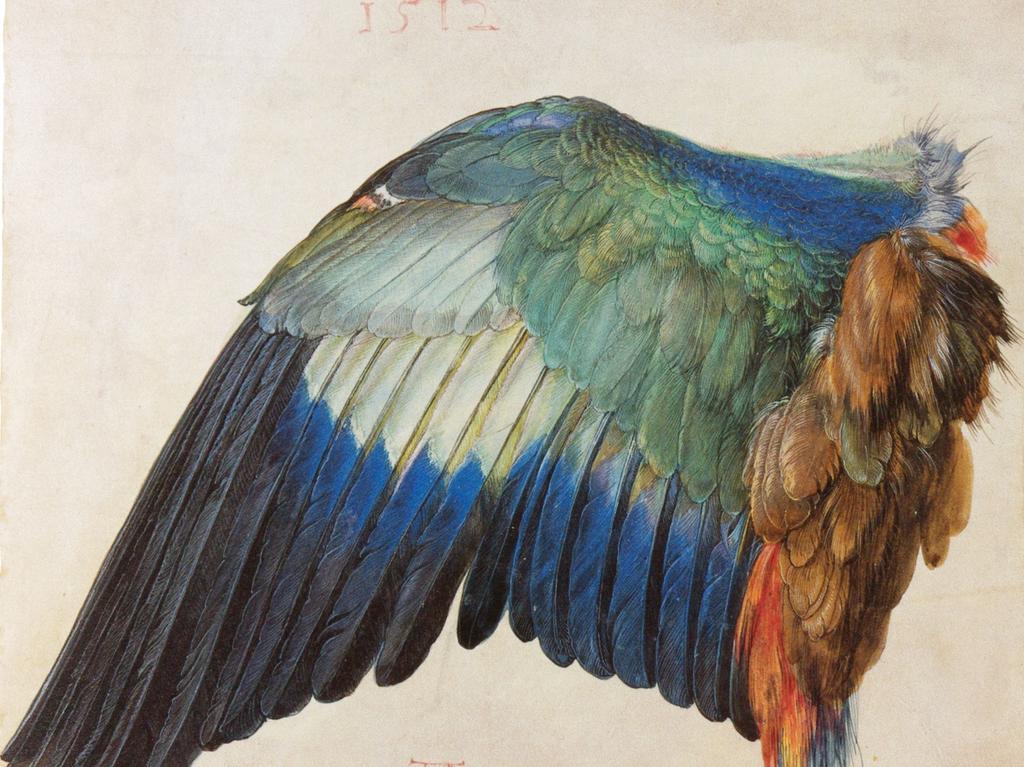 Naturdarstellung in der Kunst war ein Gebiet, das Dürer revolutionierte: Er war der erste, der Tiere, Pflanzen, Felsformationen, Landschaften und Städte systematisch nach dem Naturvorbild gemalt und gezeichnet hat. Dabei bediente er sich einer relativ neuen Technik, dem Aquarell, das er als erster zu höchster Meisterschaft geführt hat. Hier zu sehen: Der Flügel einer Blauracke.