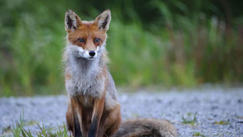 Darauf macht Bayern Jagd: die 15 meisterlegten Tiere