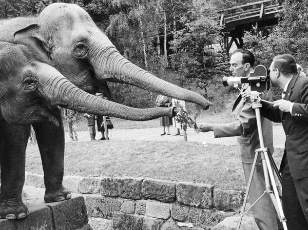 SamSon: Nürnberger Tiergarten ( veröff. am 6.7.1960)