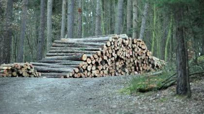 Der Holzeinschlag im Fürther Stadtwald wird moderat gehalten - auch das war ein Faktor für die Verleihung des Bayerischen Staatspreises war.