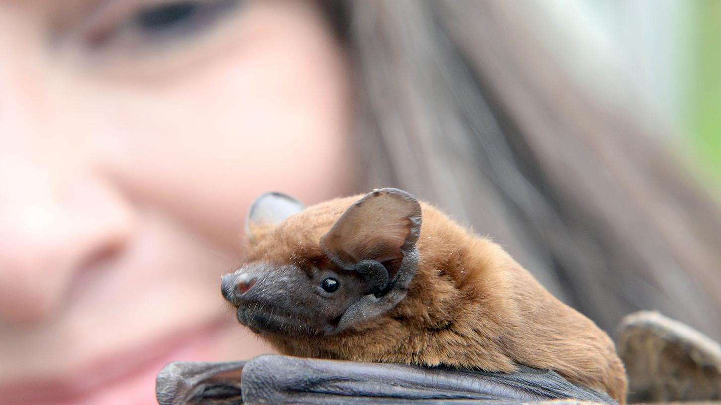 Bettina Cordes setzt sich seit Jahren für den Schutz der Fledermäuse im Großraum ein.
