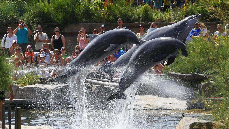 Der Tiergarten ist nicht nur eine Freizeiteinrichtung. Er dient auch zur Arterhaltung, zu Forschungszwecken und er ist eine Bildungseinrichtung. Manchmal ist er aber nur schön. Ganz besonders, wenn die Delfine springen.
