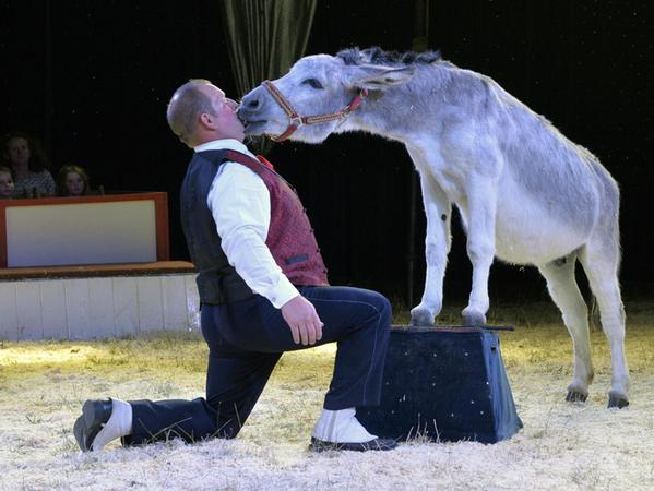 Die Akrobatin schwebt elegant am Tuch in der Höhe. Esel Manolito liebt seinen Clown Timmy Carelli.
