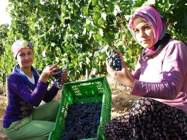 Das Weingut ist ein wichtiger Arbeitgeber in der armen Region.