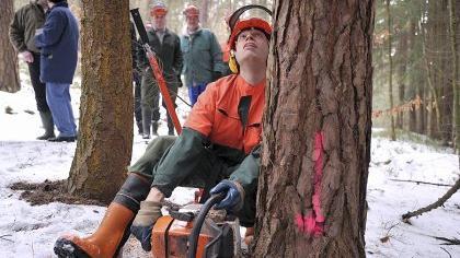 Präzisionsarbeit mit der Motorsäge: Der Fürther Forstwirt Michael Schwerdt demonstriert beim Waldpraxistag im Fürther Stadtwald das fachgerechte Fällen einer Kiefer.