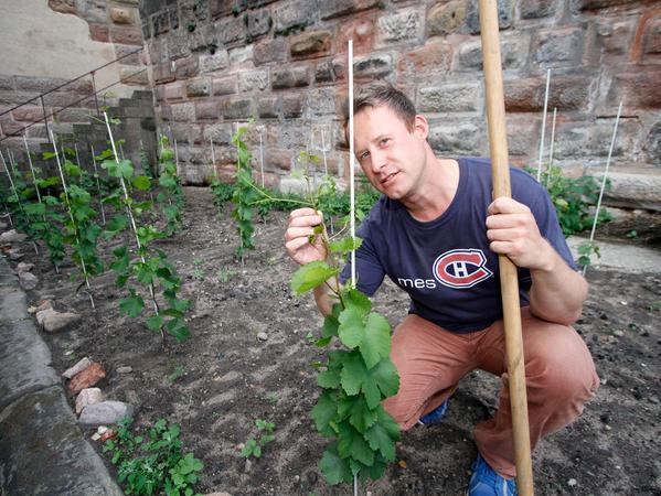 LOKALES Foto: Eduard Weigert 2.8.17..Patrik Fritz baut Wein am Burgberg an am Ölberg
