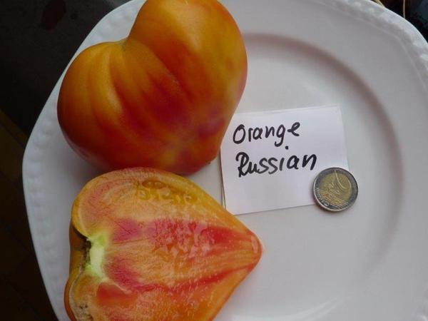 Orange Russian