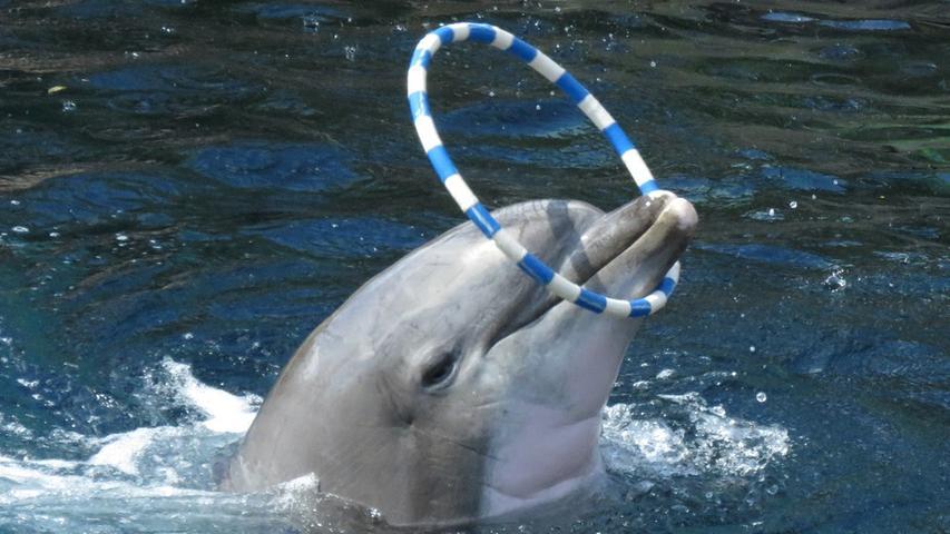 Mit Moby eine Runde im Tiergarten schwimmen - das würden wir uns doch bei den heutigen Temperaturen alle wünschen!