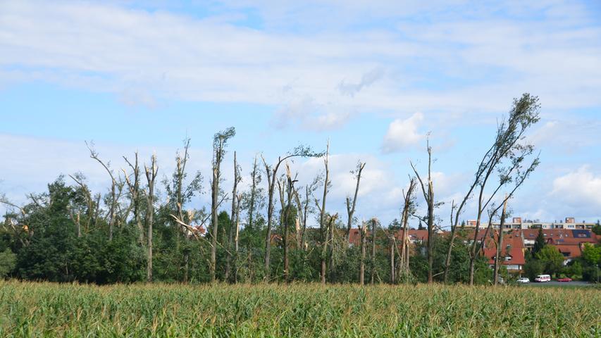 Die Cadolzburg muss wegen Sturmschäden geschlossen bleiben, Dächer wurden abgedeckt, Bäume begruben Autos: Bilder von unseren Fotografen und unseren Lesern zeigen das Ausmaß der Schäden in und um Fürth. Hier: Bäume an der alten B8.
