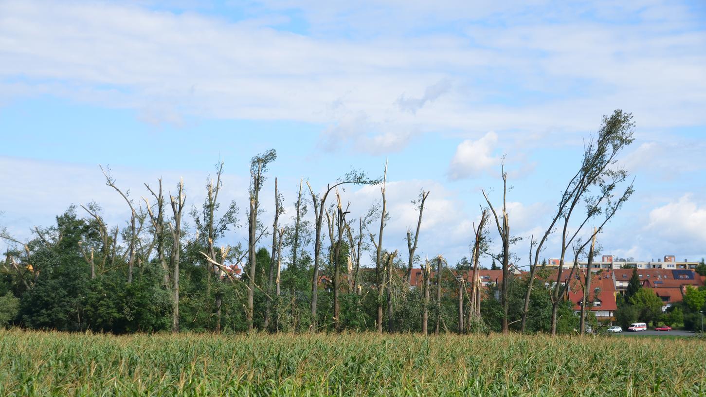 Erschreckender Anblick: In Burgfarrnbach überstand gleich eine ganze Baumgruppe das Unwetter nicht.