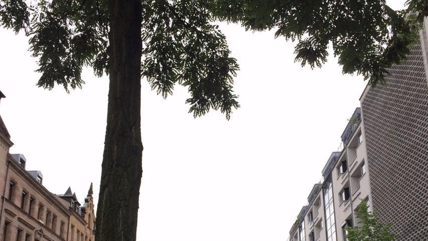 Bild aus der Südstadt: In der Flößaustraße krachte dieser Ast neben ein Auto.