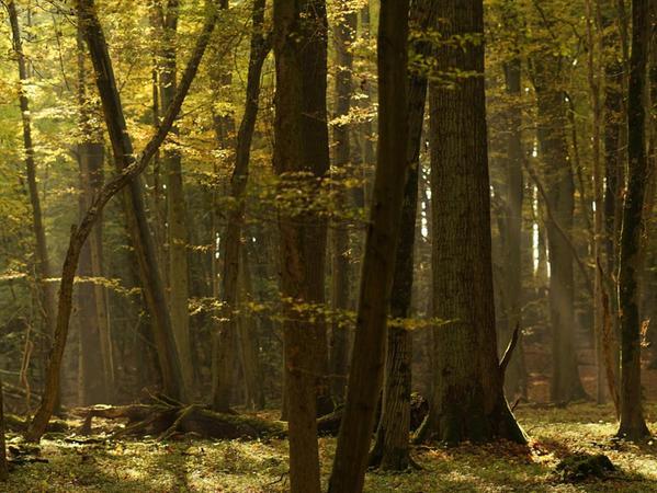 Der Lübecker Stadtwald wird naturnah bewirtschaftet und ist von Eichen und Buchen geprägt. Man achtet darauf, dass viel Totholz liegen bleibt.