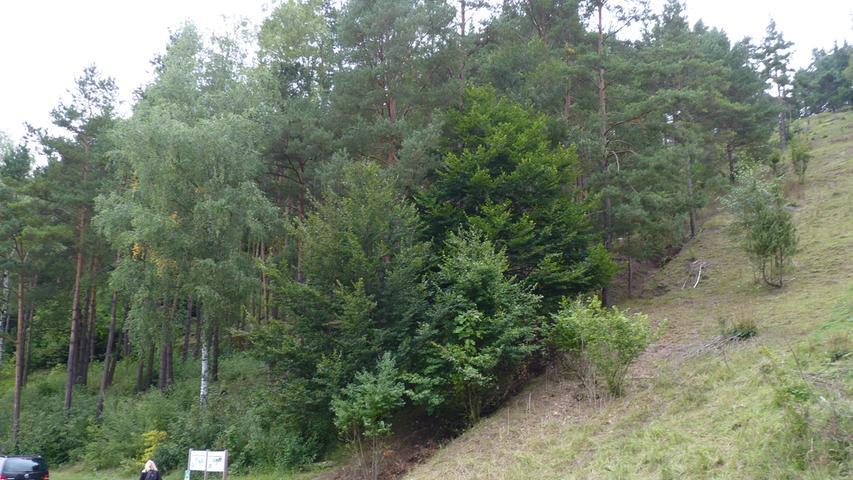 Die ehemalige Probetribüne im Hirschbachtal ist längst von Bäumen überwachsen.