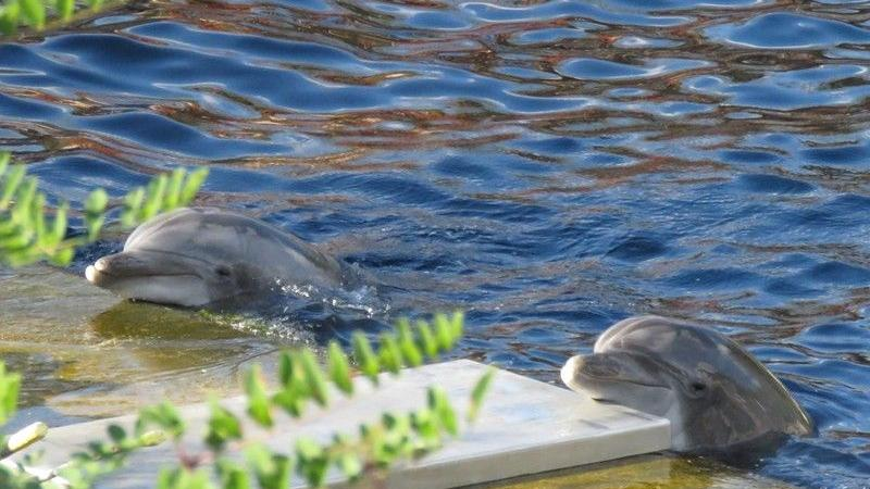 Nach einem regnerischen Wochenende und einem Montag voller Schmuddelwetter gibt's am Dienstagmittag endlich wieder Sonnenschein! Da freuen sich auch die Delfine Anke und Noah: Sonnenbaden ist halt doch am Schönsten.