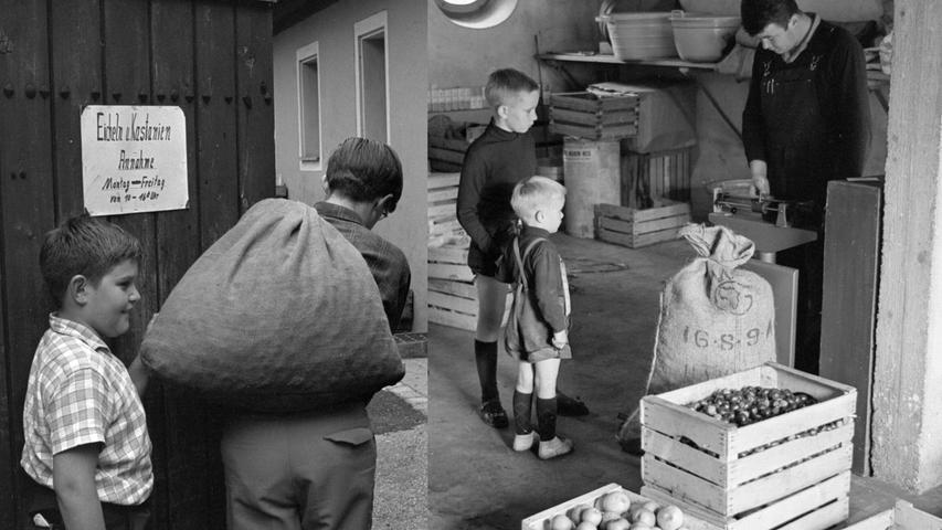 Mit einem prallgefüllten Futtersack passieren zwei Sammler die Eingangspforte des Betriebshofes (links). Wenig später werden sie für ihren Fleiß mit barer Münze belohnt.  Hier geht es zum Kalenderblatt vom 3.Oktober 1967: Geld für viele Kinder