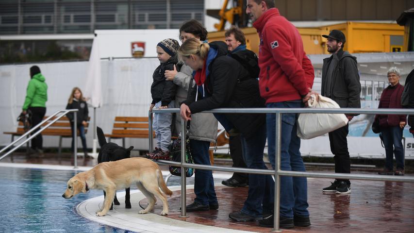 Ressort : Neumarkt..Fotograf : Wolfgang Fellner..Motiv : Hundebadetag Freibad Neumarkt..
