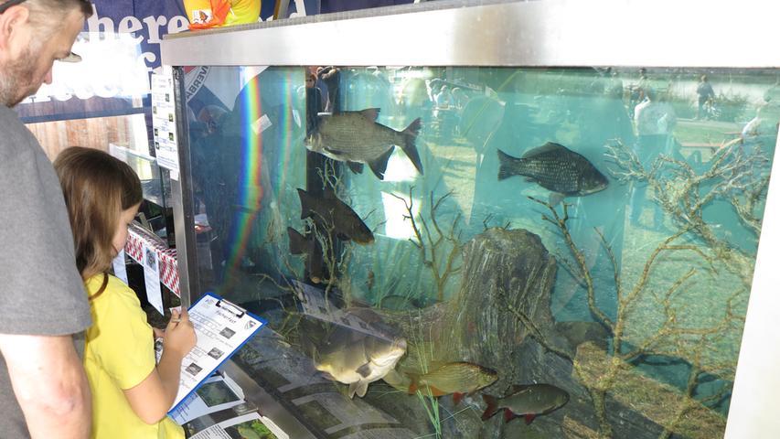 Foto: Wolfgang Dressler; Oktober 2017; AB Motiv: 5. Fischerfest Altmühlsee Seezentrum Wald 3000 Liter Wasser und viele Fische fasst das Aquarium, das der Fischereiverband Mittelfranken nach Wald transportiert hatte