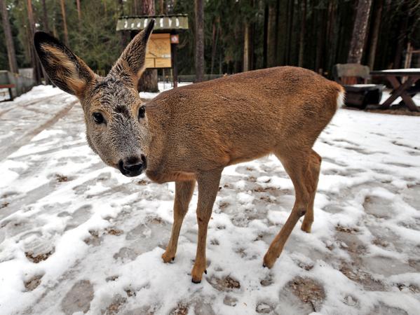 SamSon: Wildgehege im Veldensteiner Forst