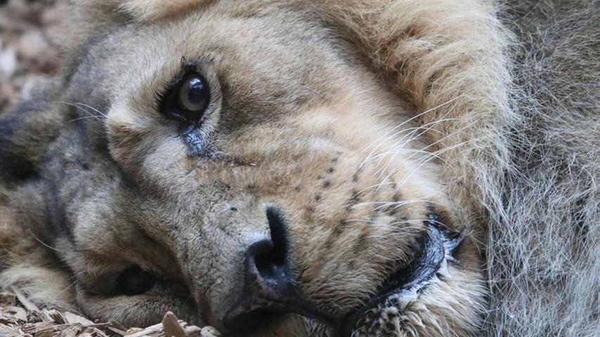 Ja Löwe, wir wissen es auch. Das Wetter ist momentan nicht unbedingt zum Lachen. Aber ab morgen scheint doch wieder die Sonne!