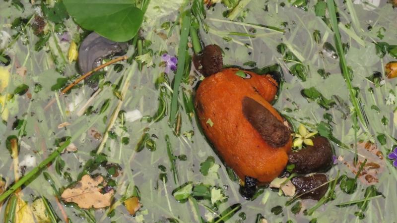Ein kleiner Tiergartenbesucher vermisst entweder seine Maus oder er oder sie wollte den Seekühen ein Geschenk machen.