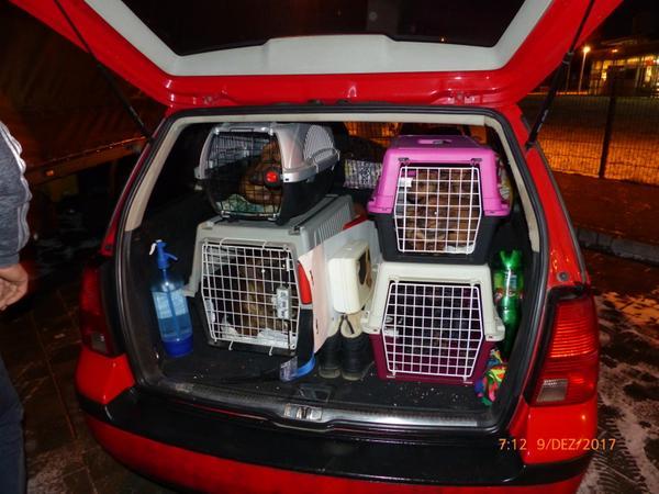 Neun Hundewelpen und ein Rüde waren in vier kleine Kisten gepfercht worden.
