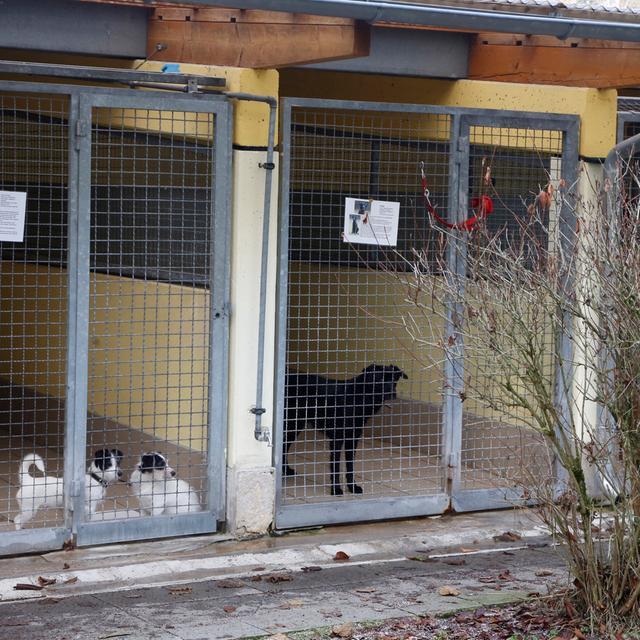 Nuernberg , 13.12.2017..Ressort: Online Fotografie: Stefan Hippel..Tierheim Nürnberg für Samson , Hunde , Hundezwinger