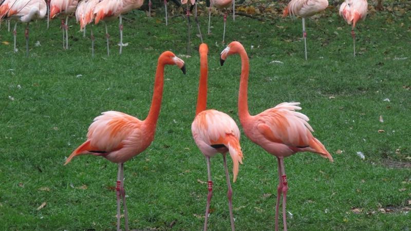 Auch Flamingos teilen sich in Cliquen auf. Ganz wie früher auf dem Schulhof, nur deutlich pinker.