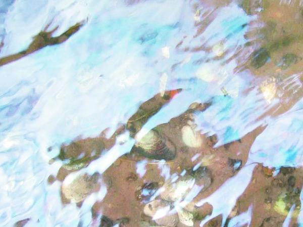 Streng geschützt: Die Bachmuscheln stehen auf der Roten Liste und dürfen keinesfalls ausgegraben werden. Rolf Syrigos