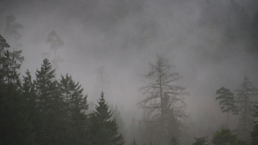 Vor lauter Feuchtigkeit dampfen die Wälder udnd verleihen dem Schambachtal ein bisschen Gebirgsflair.